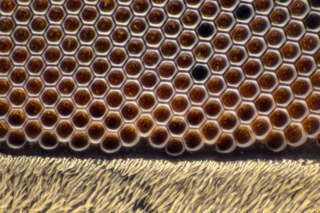 Extreme Magnification - Fly compound eye with microscope, 100x magnification Stock Photo