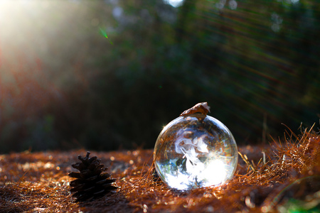 crystal ball on the ground with dead leafs a pine and sun reflection on a autumn scenic noon