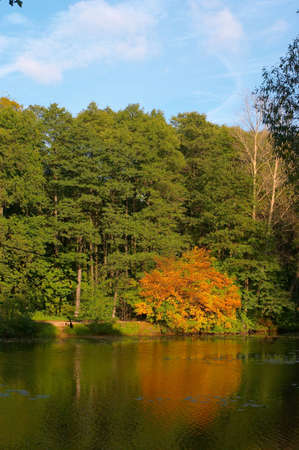 Autumn wood around of lake in a sunny day With a yellow bush Stock Photo