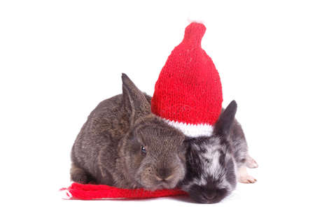 two small rabbit under one red santa hat photo