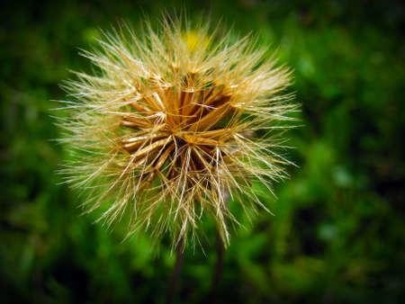 flower                  Stock Photo - 17399235