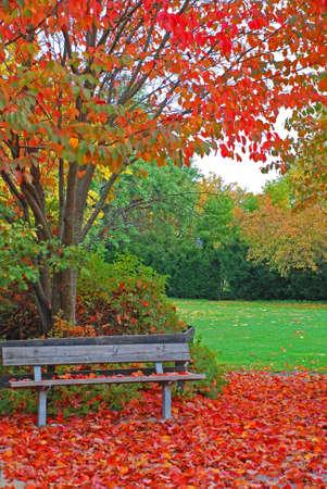 Autumn,leafs photo
