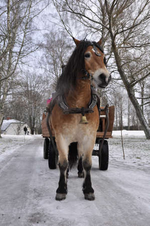 Winter driving on horse photo