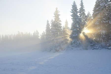 sweden winter: Sunbeams trough the tree in winter