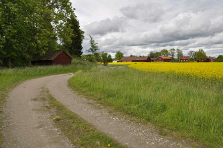 A typically Swedish country road with rape Stock Photo - 13965892