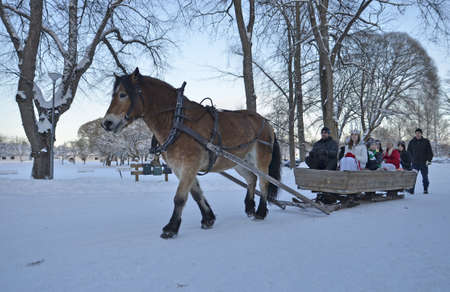 horse sleigh: Gysinge, Sweden - December 08: Santa lucia goes to sleigh with brown horse at Christmas time in Gysinge on December 08, 2012 in Gysinge Sweden.