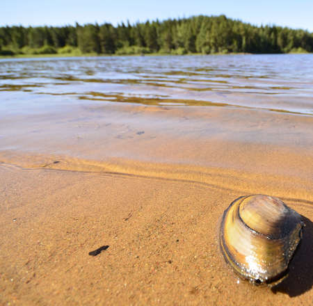 Shell in the sand on the riverbank photo
