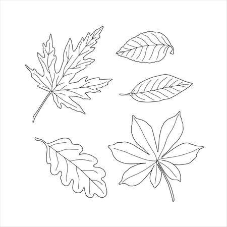 Autumn leaves set of black and white outline seasonal images simple fall ornament in hand drawn doodle style