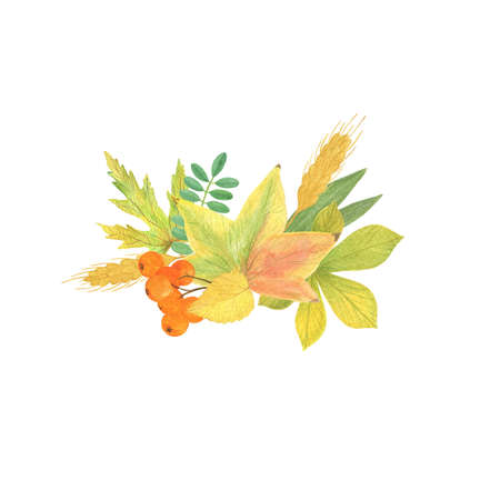 Autumn elements arrangement with ash-tree berries, wheat and yellow leaves seasonal fall holidays watercolor floral illustration, composition for halloween and thanksgiving