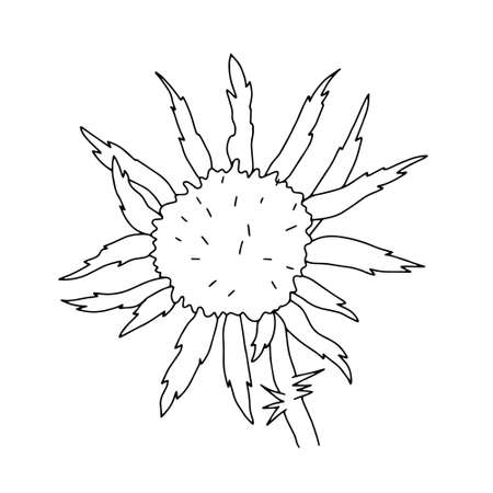 Milk thistle wild flower vector outline illustration, simple botanical image in hand drawn style, symbol of Scotland