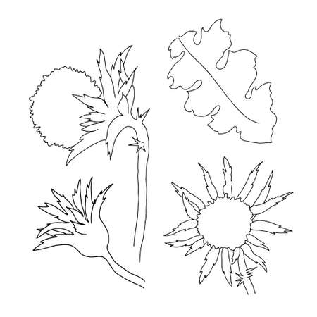Milk thistle wild flowers and leaves set vector outline illustration, simple botanical image in hand drawn style, symbol of Scotland 矢量图像
