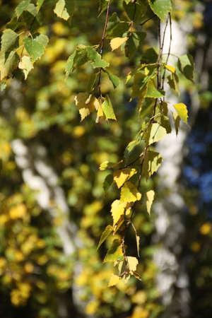 russian autumn
