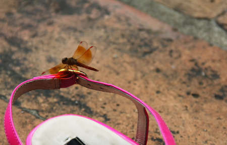 Dragonfly on a shoose