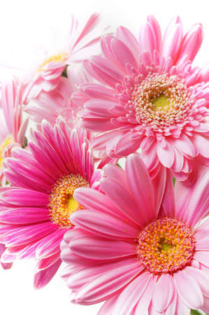 ピンクのガーベラの花束 写真素材