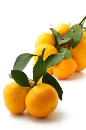 mikan; satsuma; TV orange;  Japanese orange photo