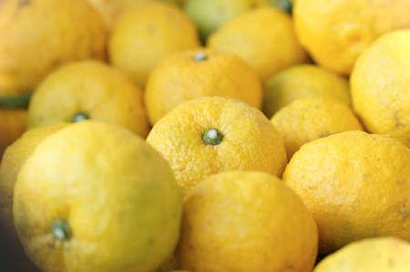 柚子 junos 和柑橘の一種であります。 写真素材