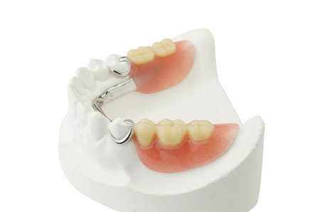 lower teeth: Denture  with clipping path on white background