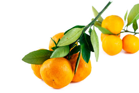 Japanese orange; Satsuma with branch on the white background photo