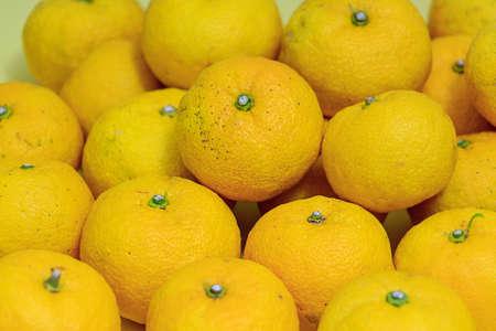多くは黄色い日本の鬼頭柚子果実 写真素材