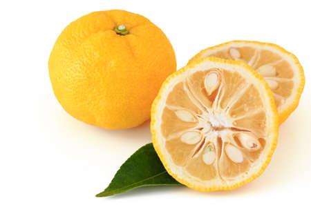 Citrus junos op witte achtergrond Stockfoto