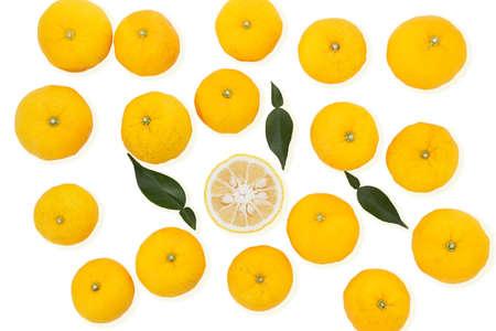 Citrus junos sur fond blanc