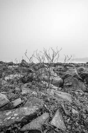 blackwhite: Black-White dead tree and stone with Foggy background  at road side