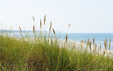 sea grass: At the Ocean