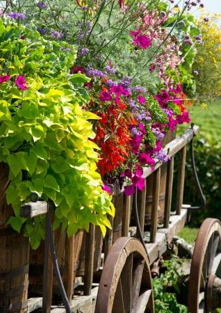 carreta madera: Flores de verano Foto de archivo