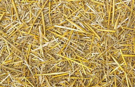 Hay Background Image photo