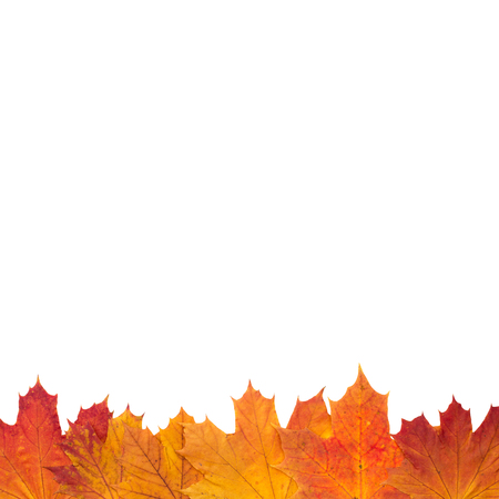 Autumn Leaves on white Background photo