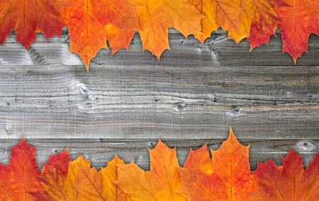 indian thanksgiving: Autumn leaves on wooden background