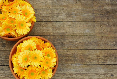 Two flower pots with yellow flowers on wooden background texture