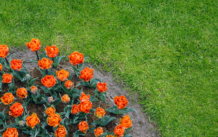 Orange flowers in the garden with green grass Stock Photo