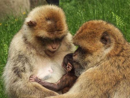 hijos: Monos Foto de archivo