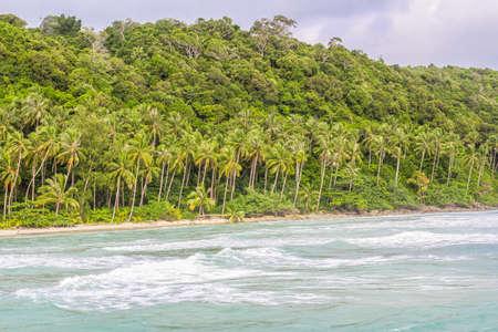 Coconut Tree Fan 版權商用圖片