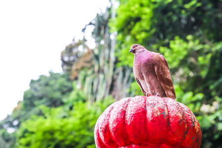 Red bird at Buta Cave in Malaysia