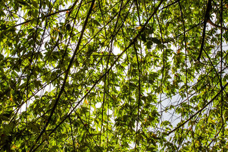Green leaves in the sky