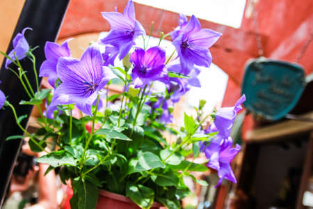 Purple flower in classic place