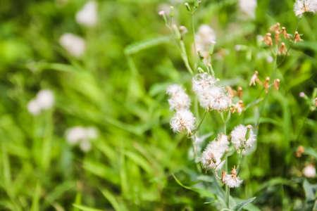 little white flower in the garden