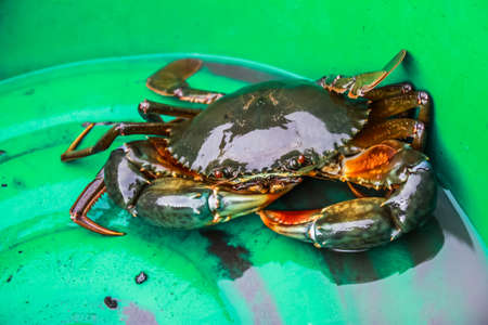 crab: Pity crab in green basin Stock Photo