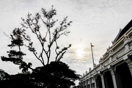 Silhouette of tree and classic building