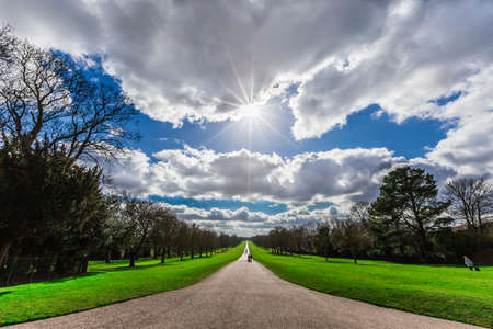 silhouette of Long Walk in Windsor Great Park in England with Horse Chestnut Trees lining the road 版權商用圖片