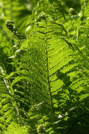Sunny fern Stock Photo