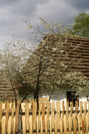 Old, wooden cabin in blossom at the countryside photo