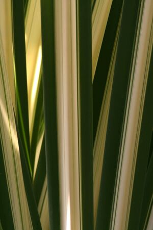 Vertical yellow and green tropical leaves texture background Stock Photo - 3411108