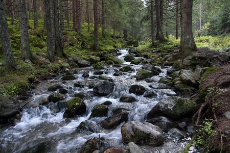 Rapid stream in the coniferous forest