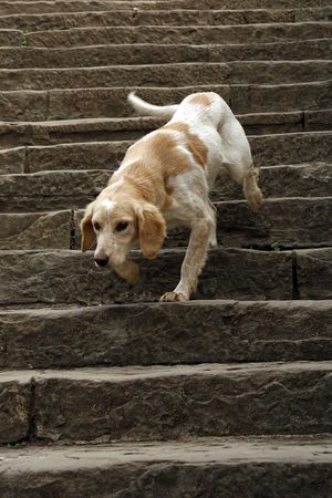 Joyful dog running down the stairs