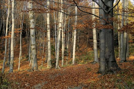 Sunny, autumn forest full of various colors Stock Photo