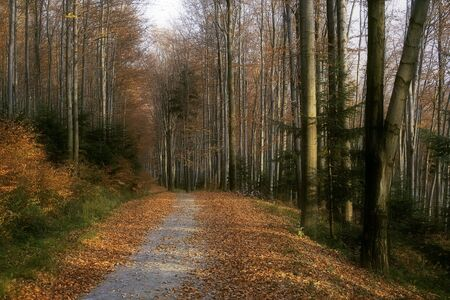 Forest road during sunny autumn day