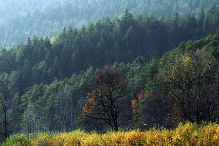 Various colors of nature at the beginning of autumn Stock Photo